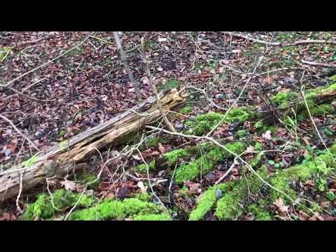 UK Wildman - Re-visiting the epic stick line incl 7fter