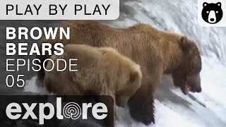 Brown Bear Play By Play - Ranger Mike Fitz - Katmai National Park - Episode 05 thumbnail