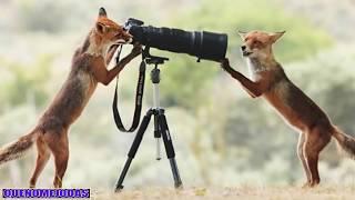 Repeat youtube video Fotos Tomadas en el Momento Exacto #19 - 2016 - Photos Taken At The Right Moment