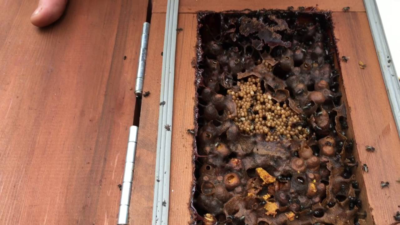 how to make a native bee hive