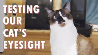 How well can our cat see?