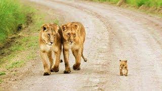 Забота о потомстве в мире животных (рассказывает биолог Павел Глазков)