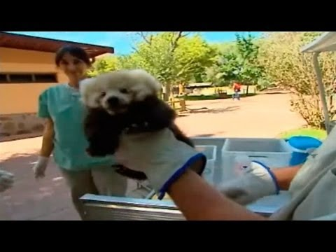 Madrid Distrito Animal: Los peques del zoo