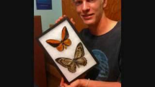 Riker Mounting Butterfly Specimens