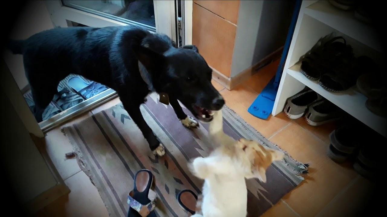 Кот Айс и собака Джесси - YouTube