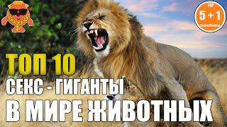 ТОП 10  СЕКС - ГИГАНТЫ В МИРЕ ЖИВОТНЫХ