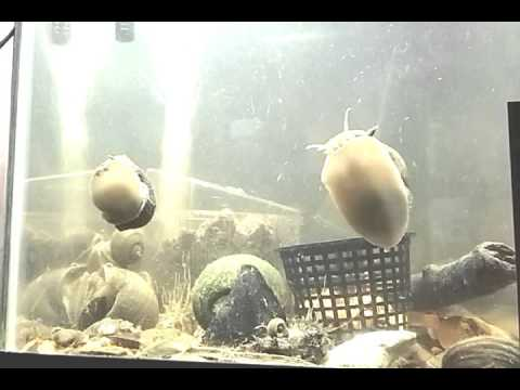 2 hours of fish tank noises youtube