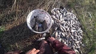 Рыбалка на Подъёмник паук Куда столько рыбы девать