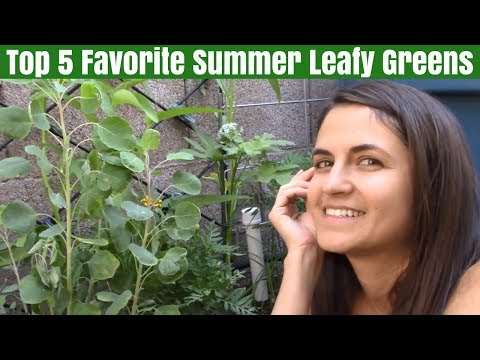My Girlfriend's Favorite Leafy Green Vegetables from the Summer Garden