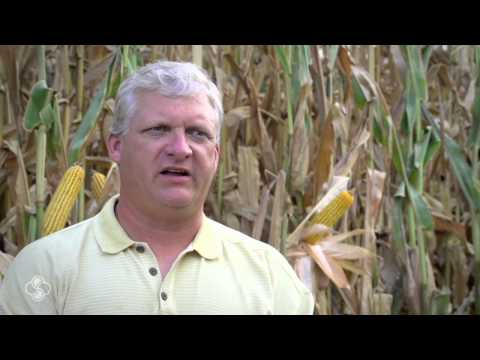 Arkansas Grower Pushes Yields in Corn Contest Plots with StollerUSA