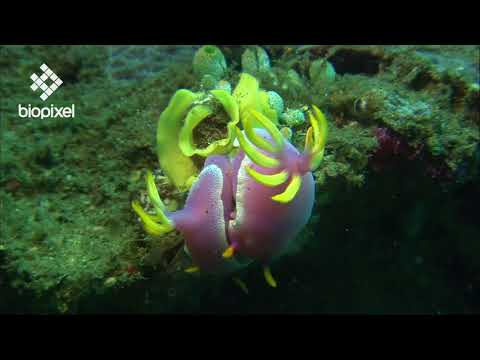 Oceanpedia   Critter finder   Mollusc    Overview