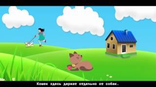 Гостиницы для животных в Перми. Кому оставить кошку, собаку или попугая
