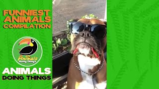 CUTE & FUNNY ANIMALS: Try Not To Laugh! VOL. 7 - FUNNIEST ANIMALS COMPILATION - Animals Doing Th