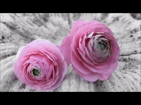 Ranuncula Sugar Flower Tutorial