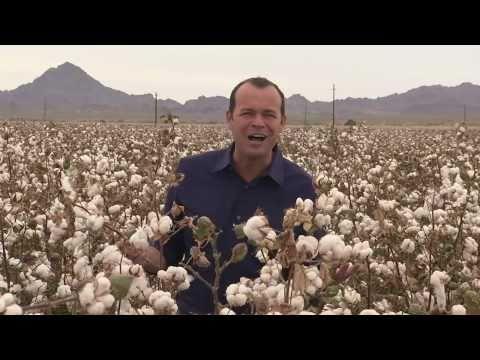 California Cotton Harvest