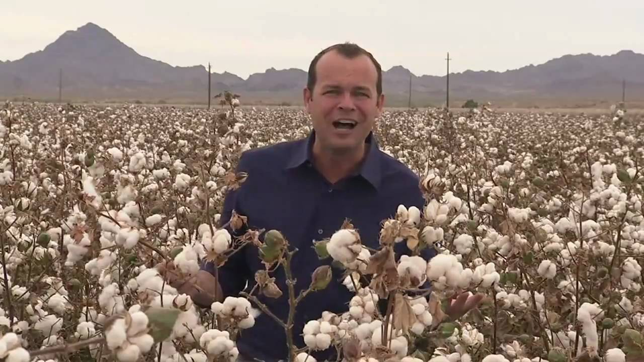 California cotton harvest youtube for America s second harvest