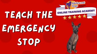 Teach your dog the Emergency STOP cue!  FREE dog training tutorial