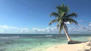 Island Fever - Jimmy Buffett