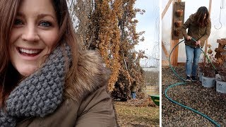 Winter Watering & Flower Bed Cleanup 🌿❄️// Garden Answer