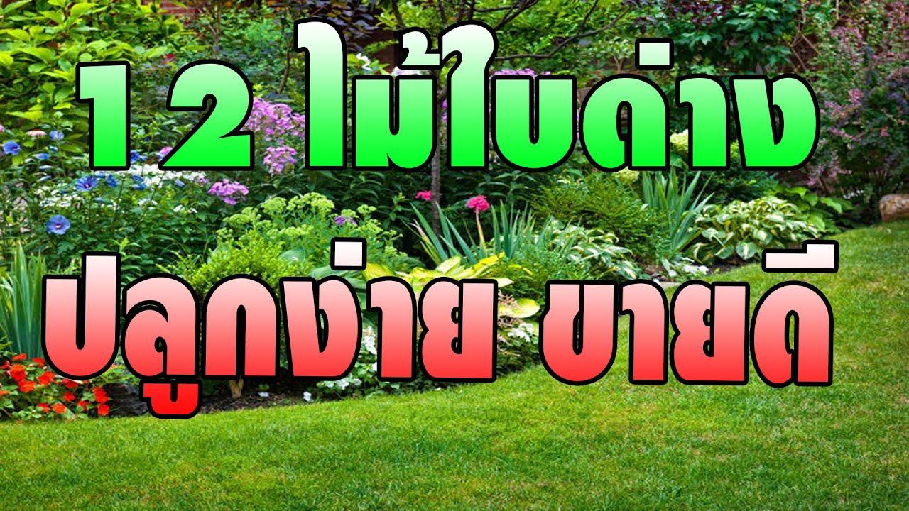 12 ไม้ใบด่าง ปลูกง่าย ขายดี จัดสวน เหมาะกับเมืองไทย