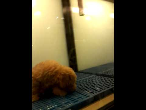 Malaysia pet shop in setia Alan