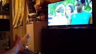 Кошка и телевизор