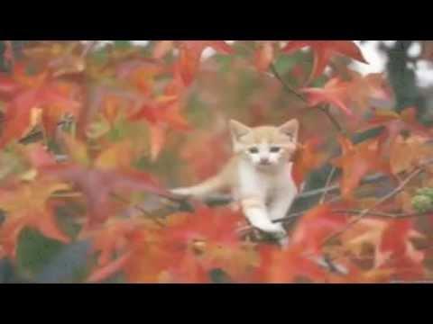 Павел Воля - Лето 2013 (видео прикол) смотреть видео