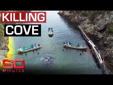 Exposing Japan's Dolphin Killing Cove | 60 Minutes Australia