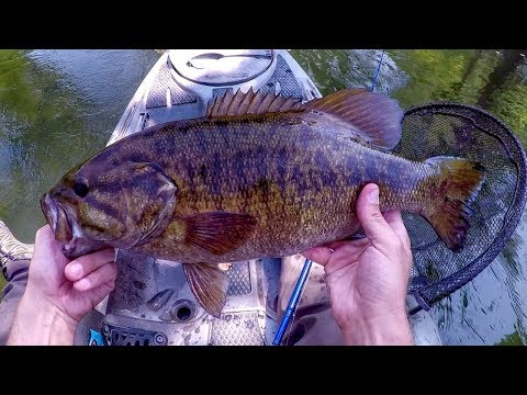 Kayak Fishing Big Smallmouth On A Small River