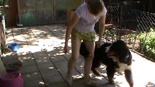 Дрессировка щенка видео уроки