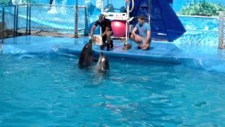 Дельфинарий Сочи год 2011(Выступление дельфинов Ирвин и Ника., 2012-10-03T15:10:58.000Z)