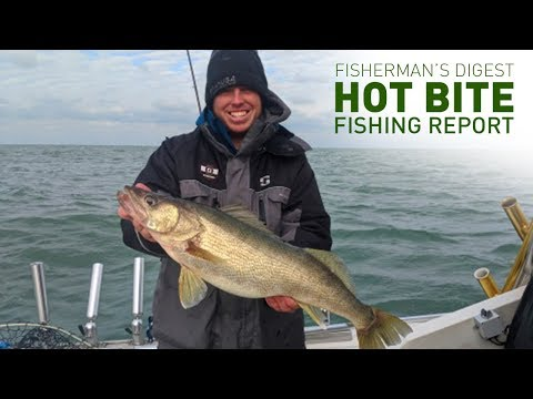 Walleye Fishing Four Ways - Hot Bite Fishing Report - Nov 20th