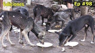 sandra-98-el-lugar-ms-poblado-de-perros-ellos-tambin-disfrutaron-en-carneada-ediciones-mendoza
