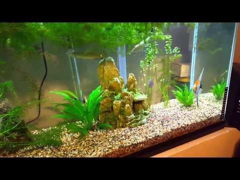 Beautiful fish tank combination baracudas too youtube for Best freshwater aquarium fish combination