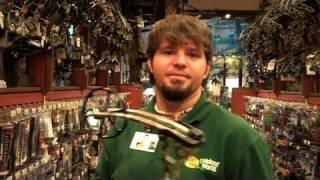 pse bass pro shop ben cox on the pse bow madness xs