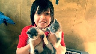 Cute Kittens for Adoption!