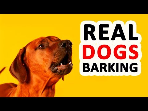 12 REAL DOG BARKING Sound Effects HD