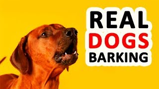 DOGS BARKING | 12 Real Dog Barking Sounds HD
