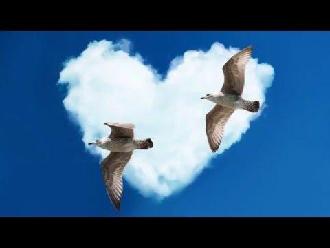 (1/2) Dualleben himmlischer Wesen in gleichem Bewusstseinsstand
