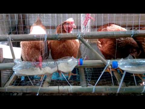 กรงเลี้ยงไก่ไข่แบบประหยัด ทำเอง