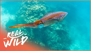 Tentacles: How Do Squid And Octopus Communicate? | The Blue Realm | Real Wild Documentary