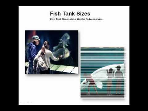 Fish Tank Sizes Youtube