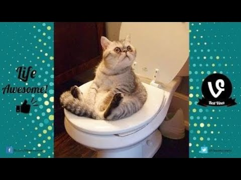 TRY NOT TO LAUGH or GRIN: Funny Vines Animals Compilation 2017 | Funny Cat & Dog Videos