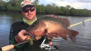Mangrove Jack fishing Queensland Sunshine Coast