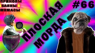 ПЛОСКАЯ МОРДА??!| ПРИКОЛЫ ПОД МУЗЫКУ| ЛУЧШИЕ ПРИКОЛЫ 2018 #66| СUBE LIKE| VITA TV