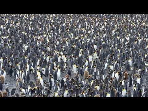 Falkland Islands, South Georgia, Antarctic Peninsula 2012