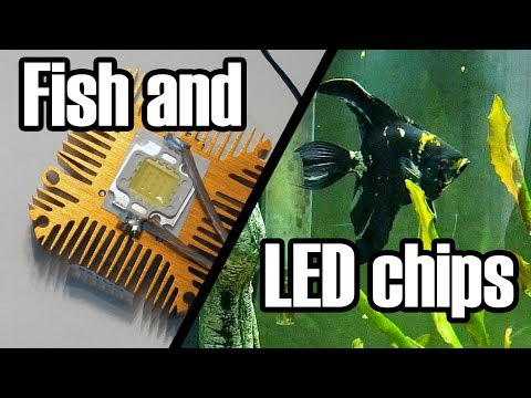 A Short Project Involving LEDs, A Fish Tank, And Some Laziness