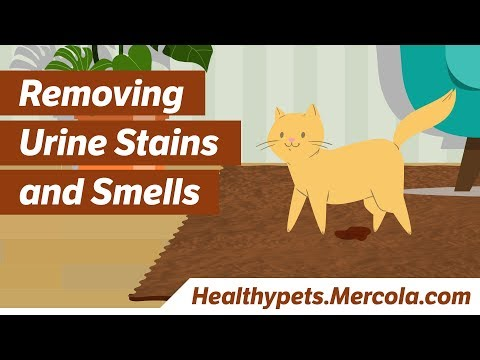 Removing Urine Stains and Smells