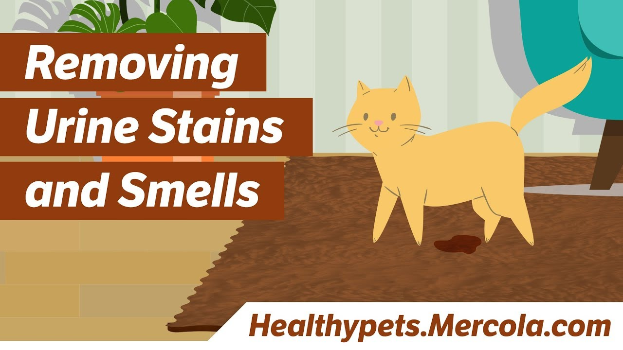 how to get rid of cat urine smell from mattress