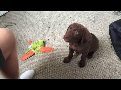 Dog Shaking After Eating New Food